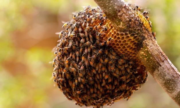[진단! 벌집계좌]① '벌집계좌' 무엇이 문제인가