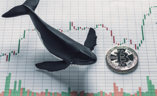비트코인 고래들 이번 조정 축적 기회로 활용 … 지난 주 매도 물량 회수 중